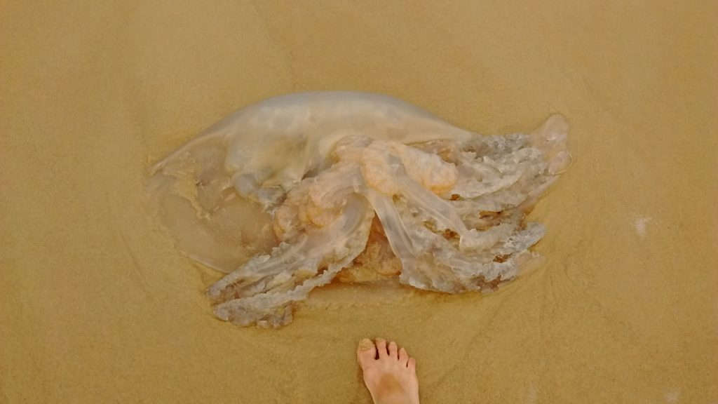 jellyfish-meets-human-foot